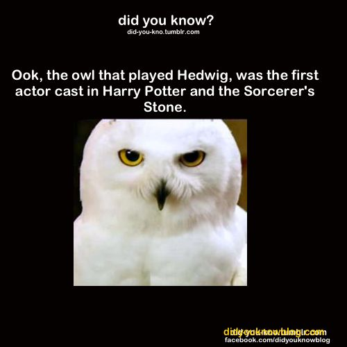 first actor cast in harry potter----LOL CAUSE CLEARLY ONCE WE FIGURE OUT WHO'S PLAYING THE OWL, WE CAN GET STARTED!!! <------repinned for comment. Brilliant!