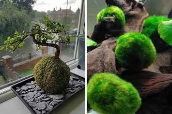 17 Plants You Can Buy Online That'll Immediately Make Your Room Better