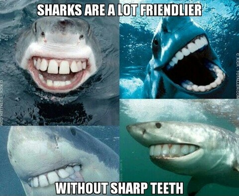 Friendly sharks!!: Sharks Teeth, Friends Sharks, Funny Sharks, Funny Stuff, Human Teeth, So Funny, Sharks Week, Sharp Teeth, Can'T Stop Laughing