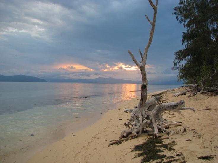 Beachcomber  Green Is. QLD Aust.