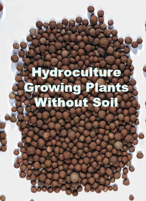 You can grow plants without using soil. Reducing the threat of insects and other soil-related issues. Learn about hydroculture here.