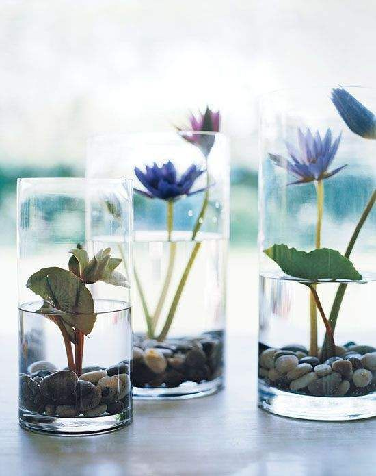 Indoor Water Garden Idea - growing water lily in a container!!! #smallgardenideas #sgi Dave has to teach me this!!!