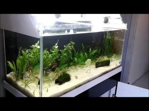 Montagem Aquário Plantado Diy passo a passo completo com coleta de Limpa-vidros e Co2 de gelatina. - YouTube