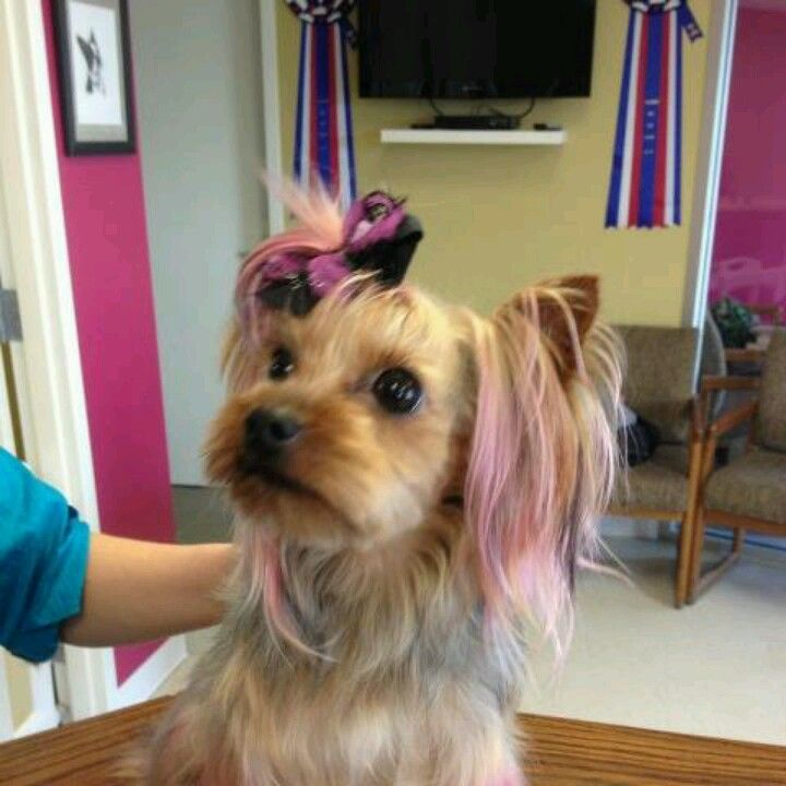 204 best Dog Grooming images on Pinterest