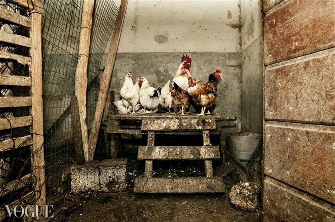PhotoVogue, hen-house