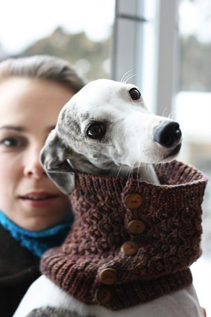 great photo, really like the knitted cowl, but the dog is super cute