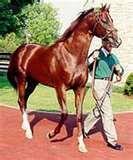 Tabasco Cat 1994 Preakness and Belmont winner