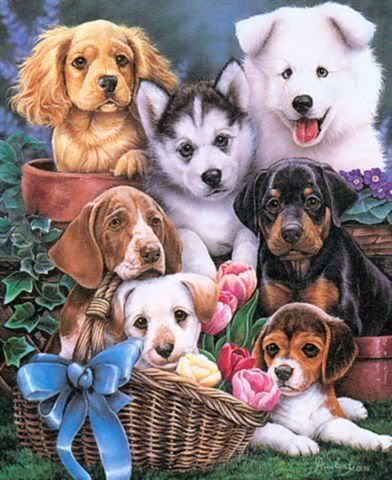 A gathering of dogs