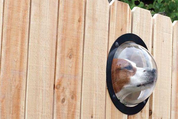 Holzzaun kleines Fenster Gartenideen-Haustiere Hund