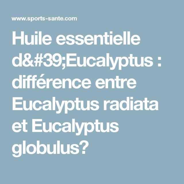 Huile essentielle d'Eucalyptus : différence entre Eucalyptus radiata et Eucalyptus globulus?