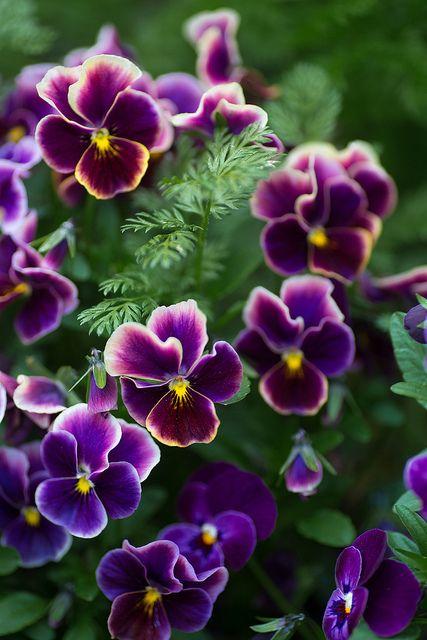 17 meilleures id es propos de bouquets de fleurs violets for Commander des fleurs par internet