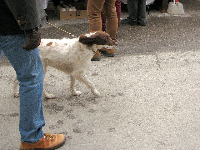 Another Maple Syrup Festival doggy | Flickr - Photo Sharing!