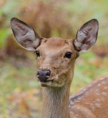 White-tailed deer in their natural habitat Stock Photo - 15275073