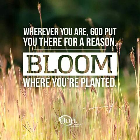 Wherever You Are, God Put You There For A Reason, Bloom ...