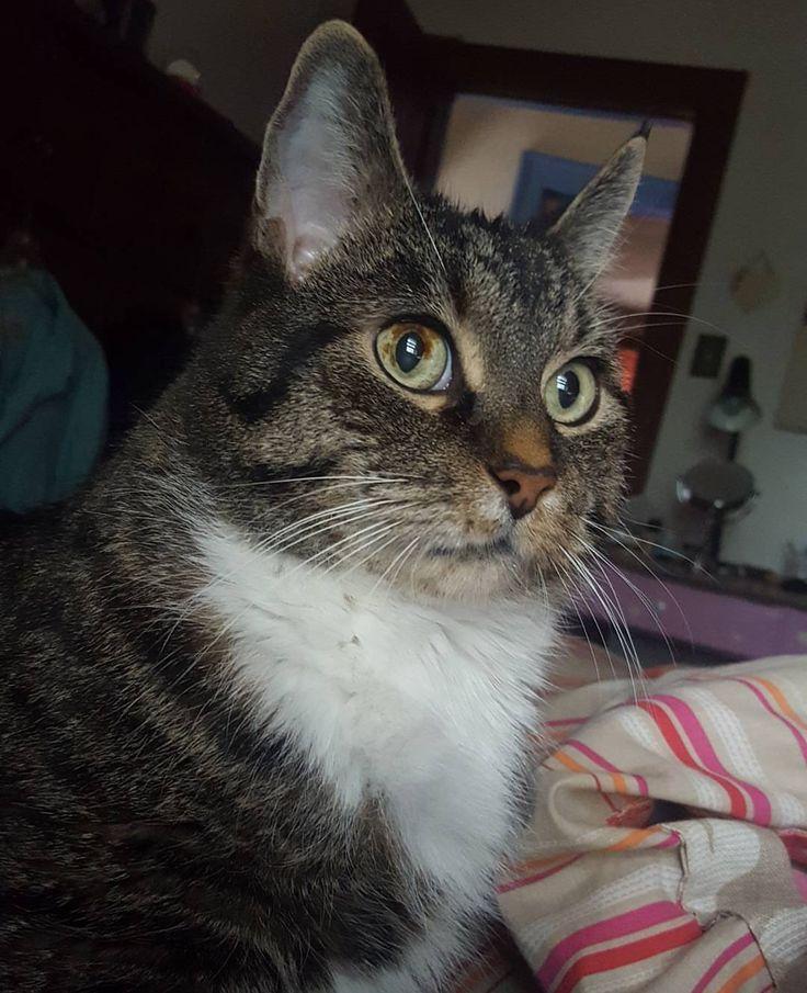 James my manx. He was a kitten when I received him as a gift when I was 15. I am 30 now. http://ift.tt/2gqZPzK