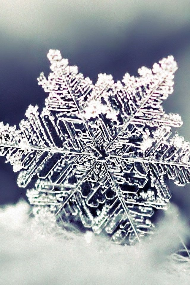 Snowflake close-up