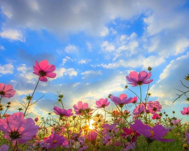 Spring  http://www.tsu.co/Ayman_Heykal