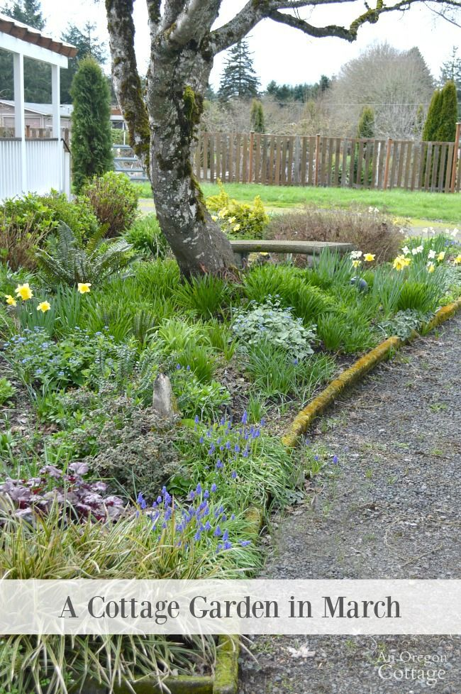 A cottage garden in march- check out what's blooming that you can grow for early spring blooms, what needs to be done in spring, and vegetables you can grow in your spring garden.