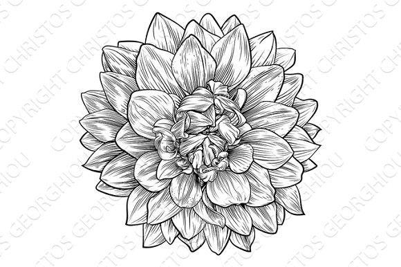 Dahlia Or Chrysanthemum Flower Woodcut Etching Chrysanthemum Flower Tattoo Chrysanthemum Tattoo Tattoos