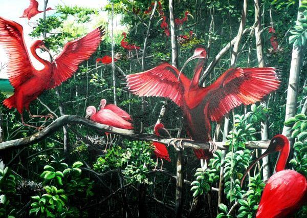 Scarlet Ibis Art Print By Karin Dawn Kelshall Best