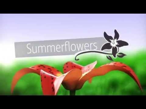 Opener Summerflowers