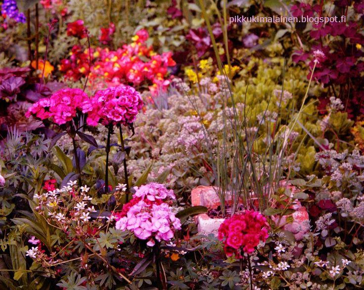 Herkkupurkki: valokuvaispiration, garden, garden