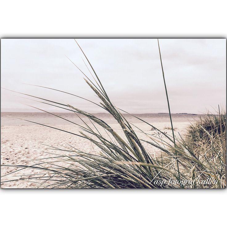 Juniminner 2016 » fotografkallen.com
