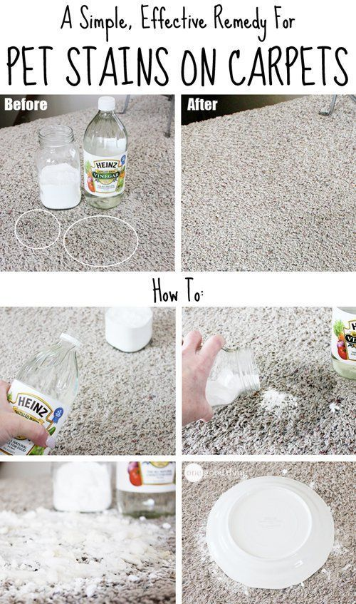 A Simple Effective Remedy For Pet Carpet Stains