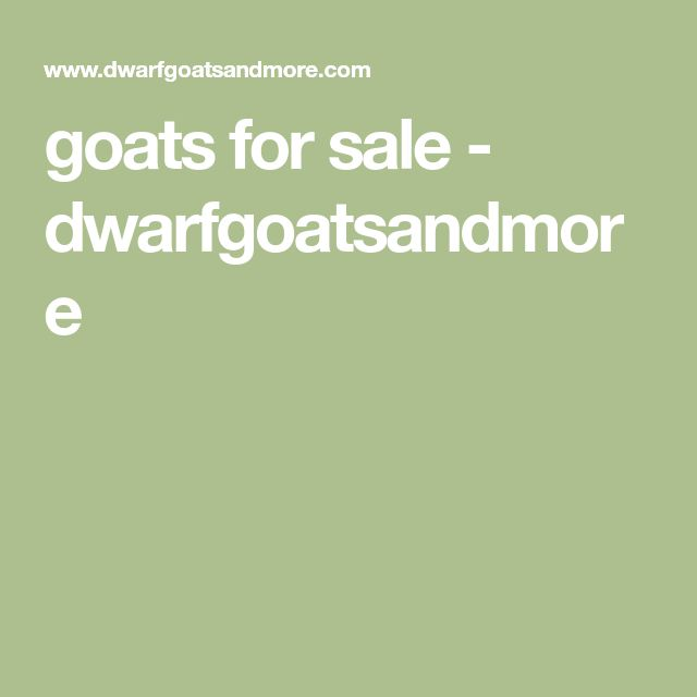 goats for sale - dwarfgoatsandmore
