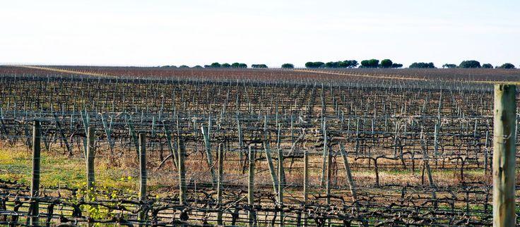 Alentejo vineyards at Esporão http://esporao.com