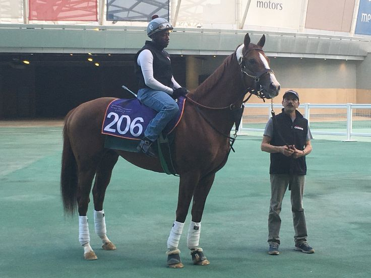 In the paddock #californiachrome prepares for Thursday'S prep race at #Meydan tmstallions shermanracing ABRLive