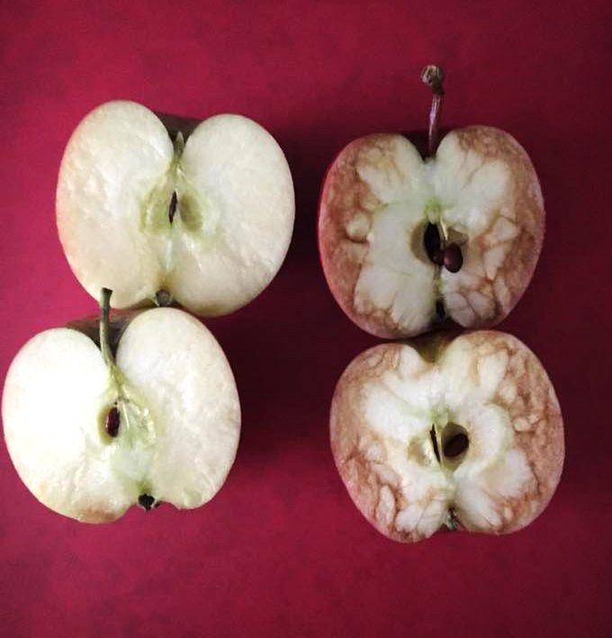 Ο πόνος που προκαλεί ο εκφοβισμός μέσα από το παράδειγμα με τα χτυπημένα μήλα - Aspa Online