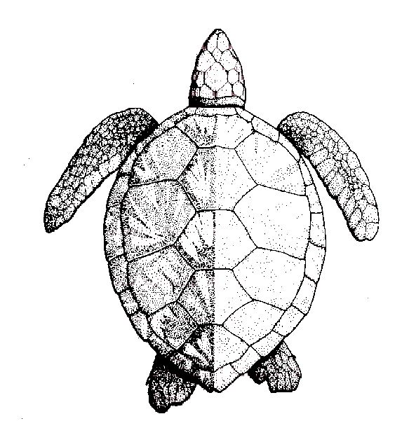 29 best Turtle Tattoo Outline images on Pinterest ...