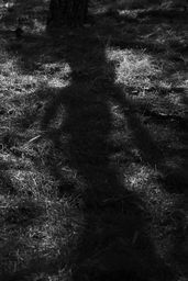 shadows in the park 4