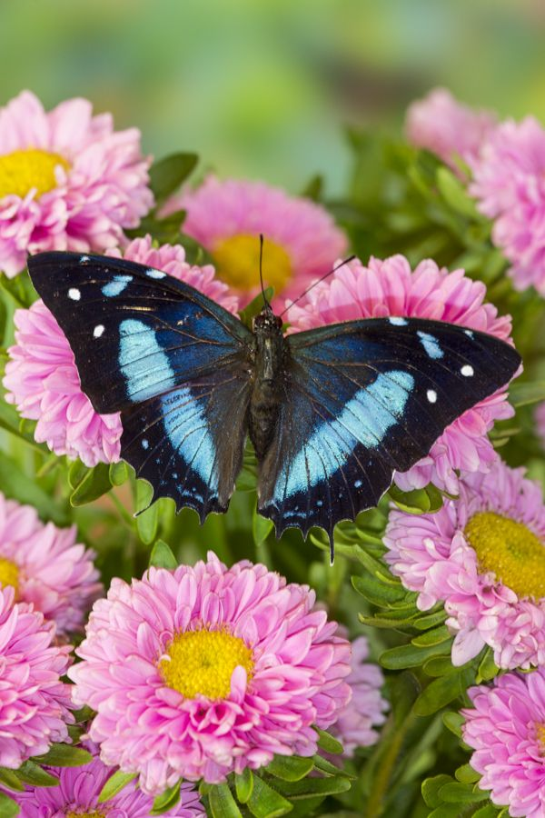 Pin By Darrell Gulin On Butterflies Ii With Images Beautiful