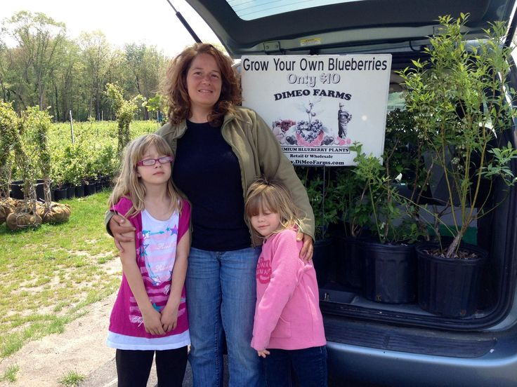 Large Blueberry Plants For Dimeo Farms Nursery