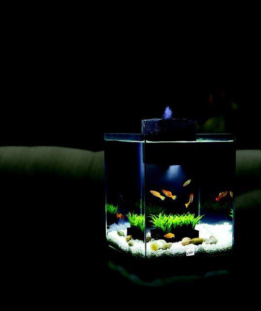 17 best images about aquariums on pinterest cichlids for Outdoor aquarium uk