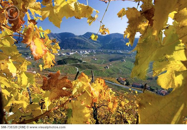 Valdobbiadene Italy - Prosecco hills