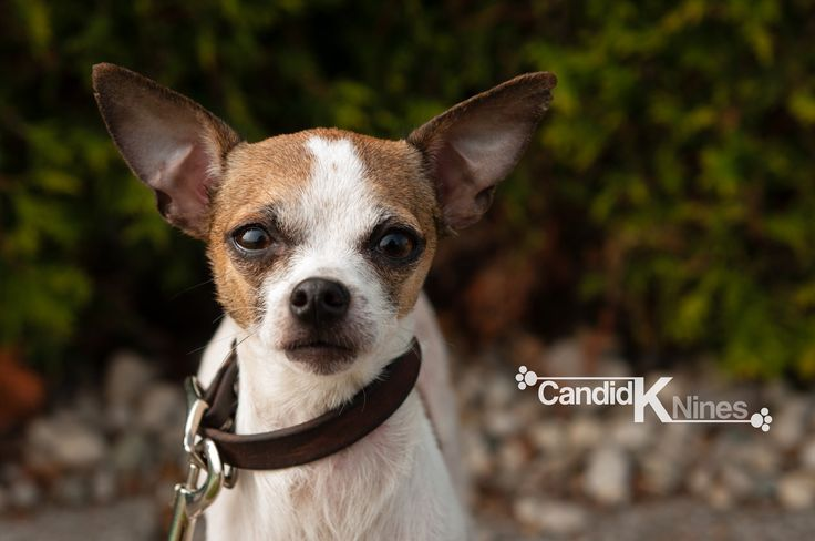 Paco - For the Love of Paws Animal Rescue