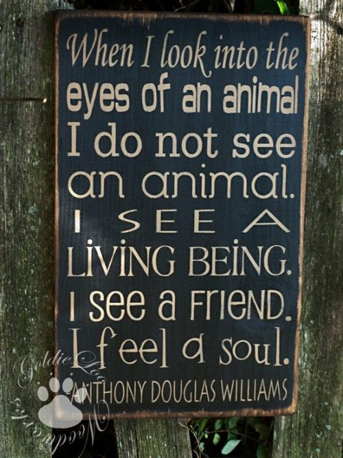 When I look into the eyes of an animal, I do not see an animal.  I see a living being.  I see a friend.  I feel a soul.  ~ Anthony Douglas Williams