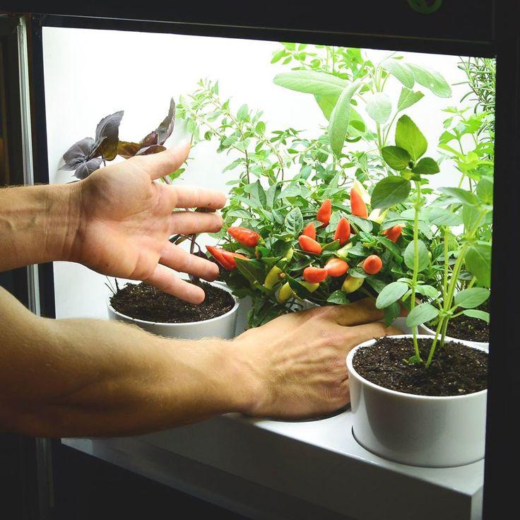 Plantario, temperos em casa