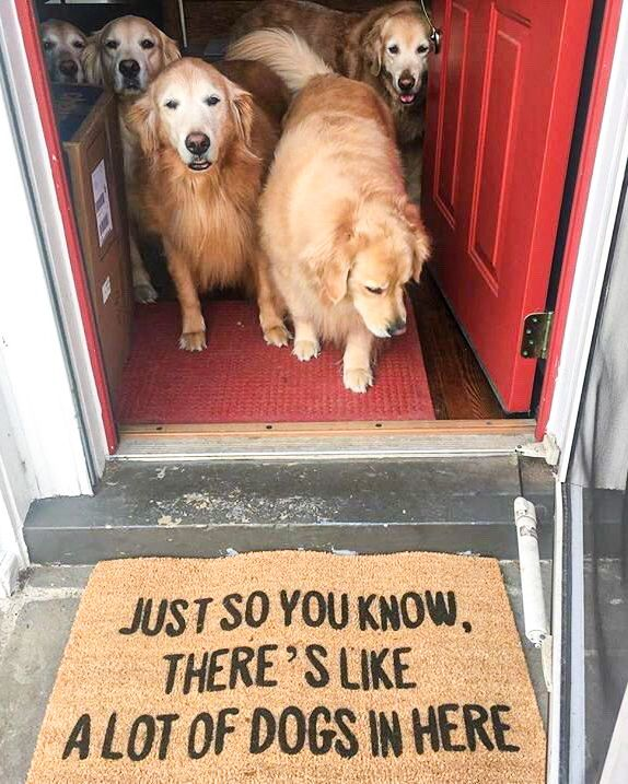 Dog Moms Guide To Show Off Your Love Diy Darlin In 2020 Funny Animals Cute Funny Animals Funny Dogs