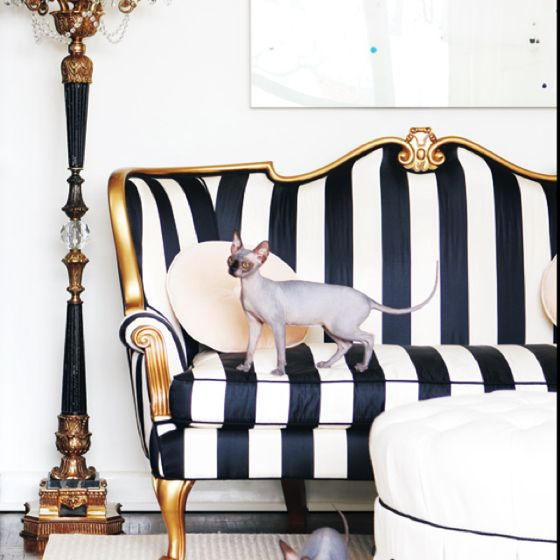 modern vintage, french provincial, white, black, gold, siamese cats.