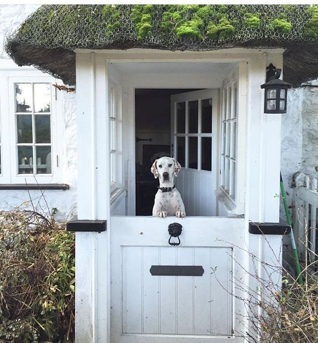 love the Dutch door...(dog is pretty cute too)