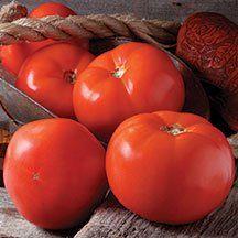 Beefsteak Tomato Valley Cat D787 (Red) 25 Hybrid Seeds by David's Garden Seeds David's Garden Seeds http://www.amazon.com/dp/B00T7YRZSU/ref=cm_sw_r_pi_dp_AxL6ub1K4Q38D