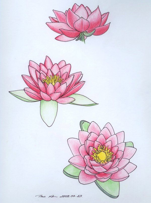 water lily tattoo - July flower - purity of heart