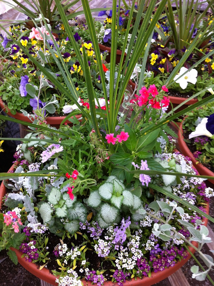 1000 images about container plants on pinterest - Potted gardentricks beautiful flowers ...