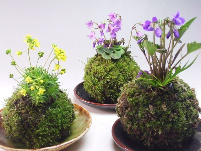 Japanese Kokedama....Moss Ball Gardens - http://www.ehow.co.uk/how_8231522_make-kokedama-moss-ball.html
