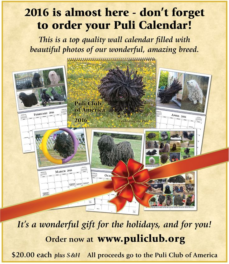 Puli calendars are available now! Puli photos to enjoy all year long Puli, Puli, Puli!