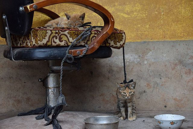 Kittens being cared for in rural China   https://www.facebook.com/ACTAsiaForAnimals https://twitter.com/Tweet_ACTAsia https://www.youtube.com/user/ACTAsia1 http://www.oninstagram.com/profile/actasia https://www.linkedin.com/company/actasia-for-animals http://actasia.tumblr.com/ https://issuu.com/actasia